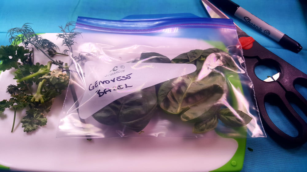 AeroGarden Genovese Basil in a freezer bag ready for freezing
