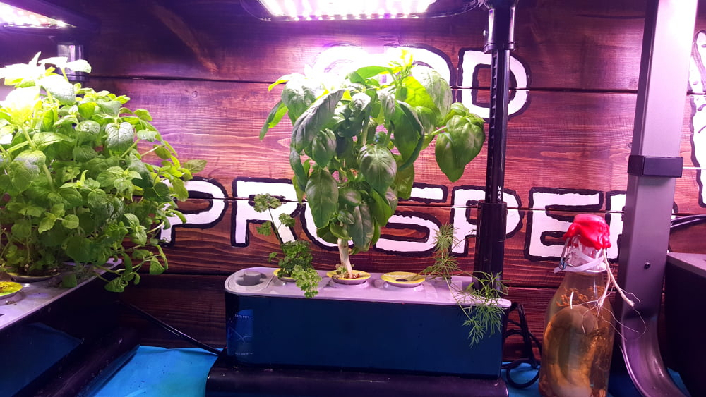 AeroGarden Sprout LED Garden 1 Week 14 before harvest